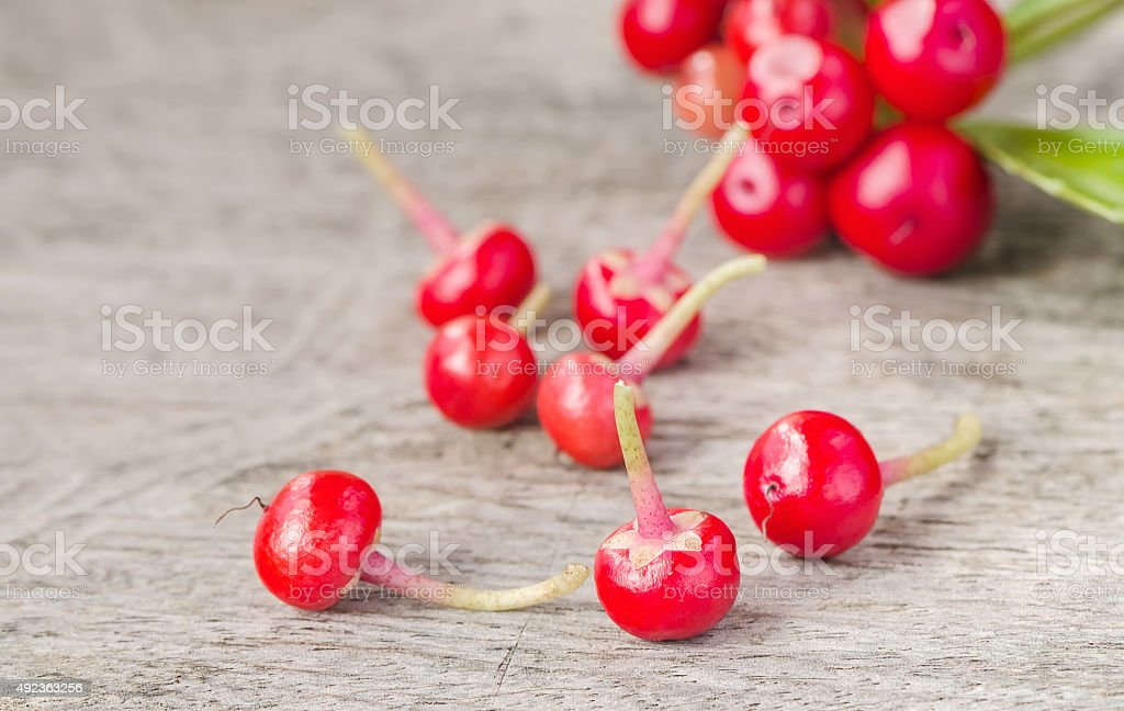 christmas berry stock photo