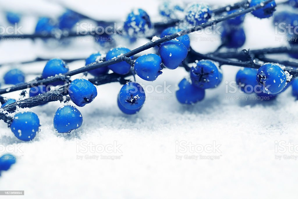 Christmas blue berry royalty-free stock photo