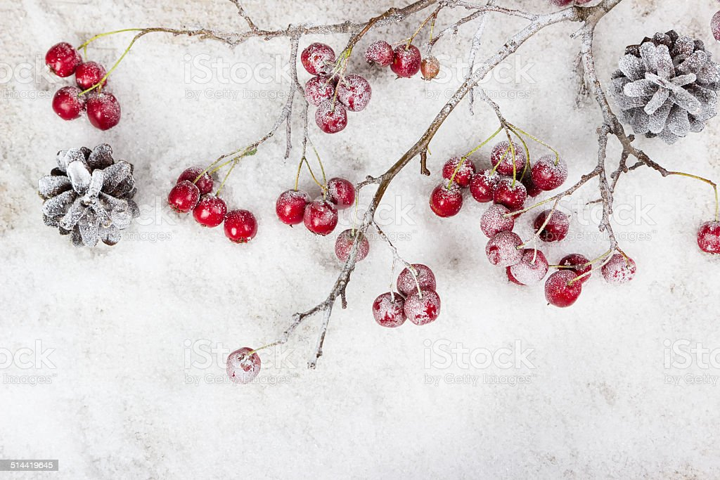 Christmas branch with berries stock photo