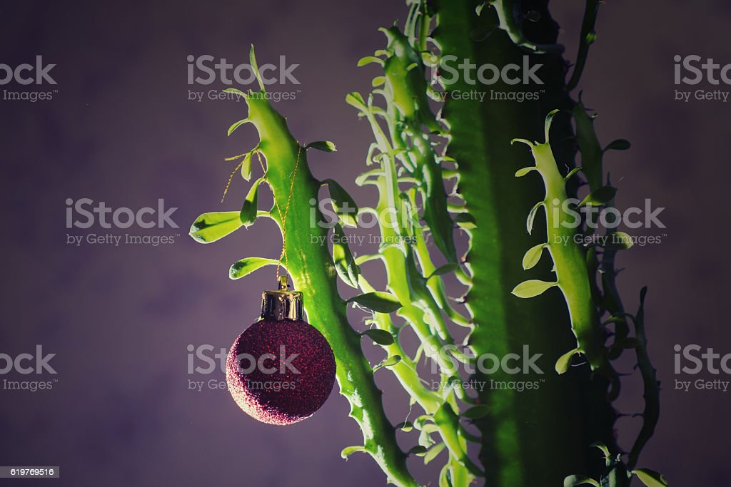 christmas cactus stock photo