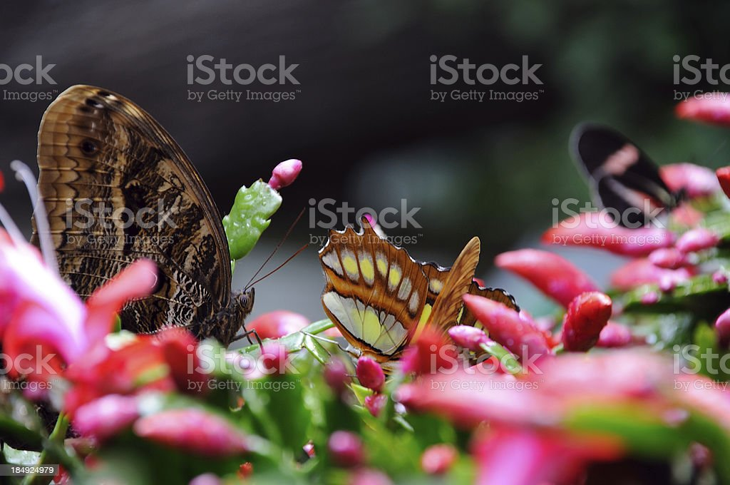 Christmas Cactus with Butterflies stock photo