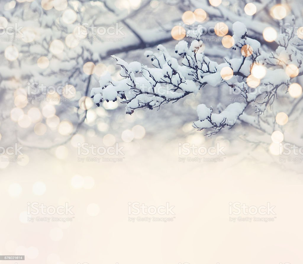 Christmas card, branch in snow stock photo