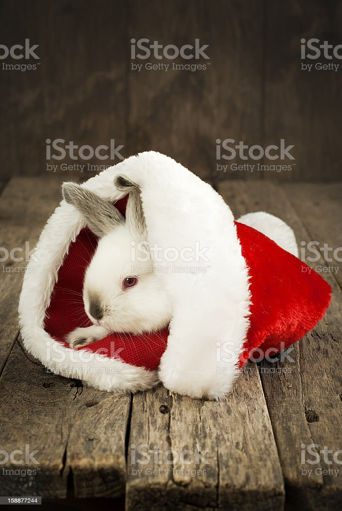 Christmas Card with White Rabbit on Wooden Background royalty-free stock photo