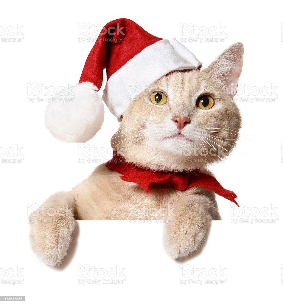 Christmas Cat (blank sign) stock photo