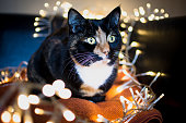 Christmas Cat with fairy lights