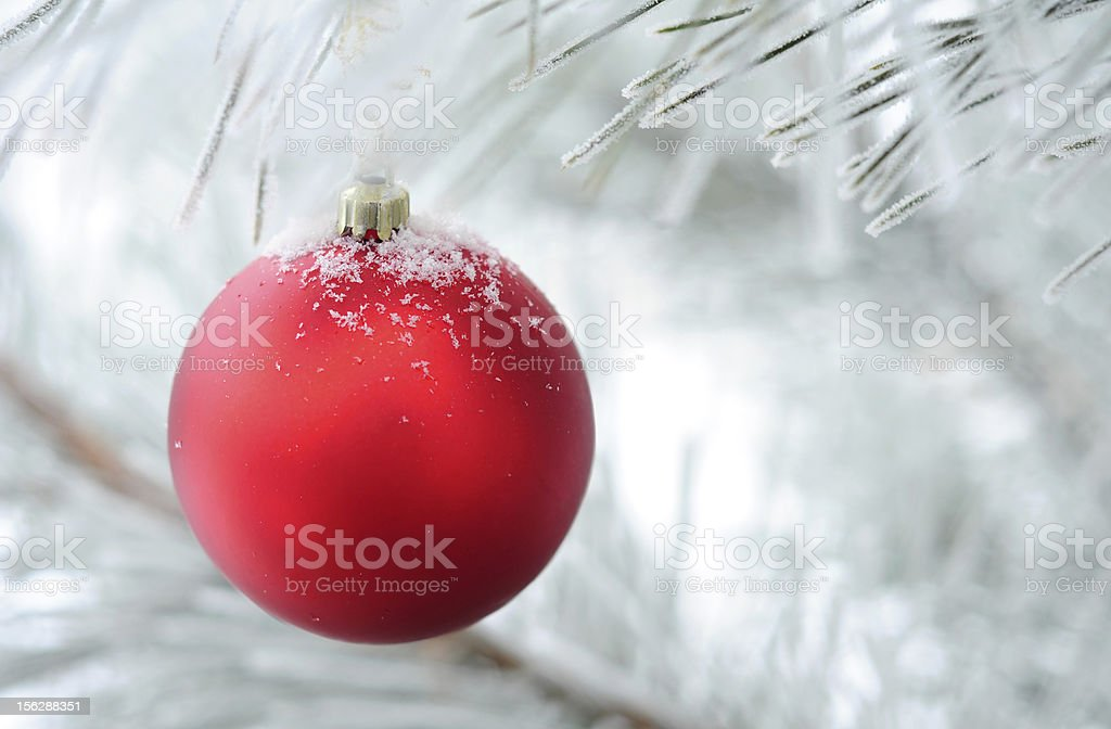 christmas decoration on fir tree branch stock photo