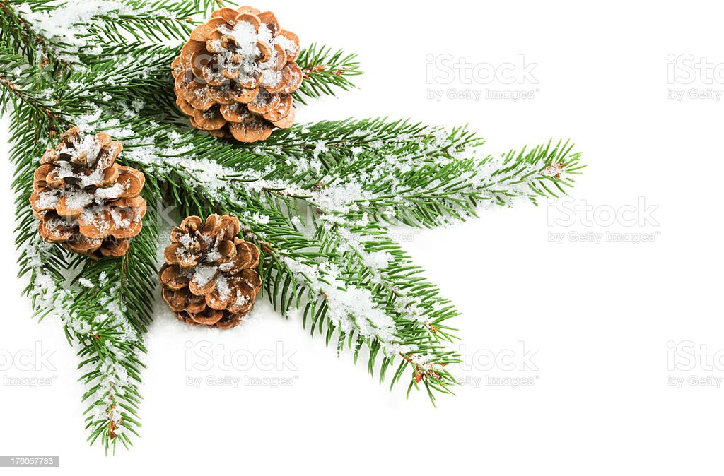 Christmas Decoration With Pine Cones and Fir Tree royalty-free stock photo