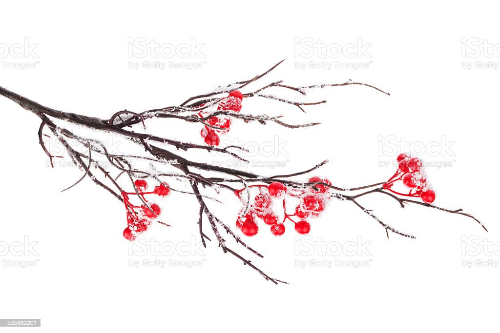 Christmas decorative snow branch with holly berry stock photo