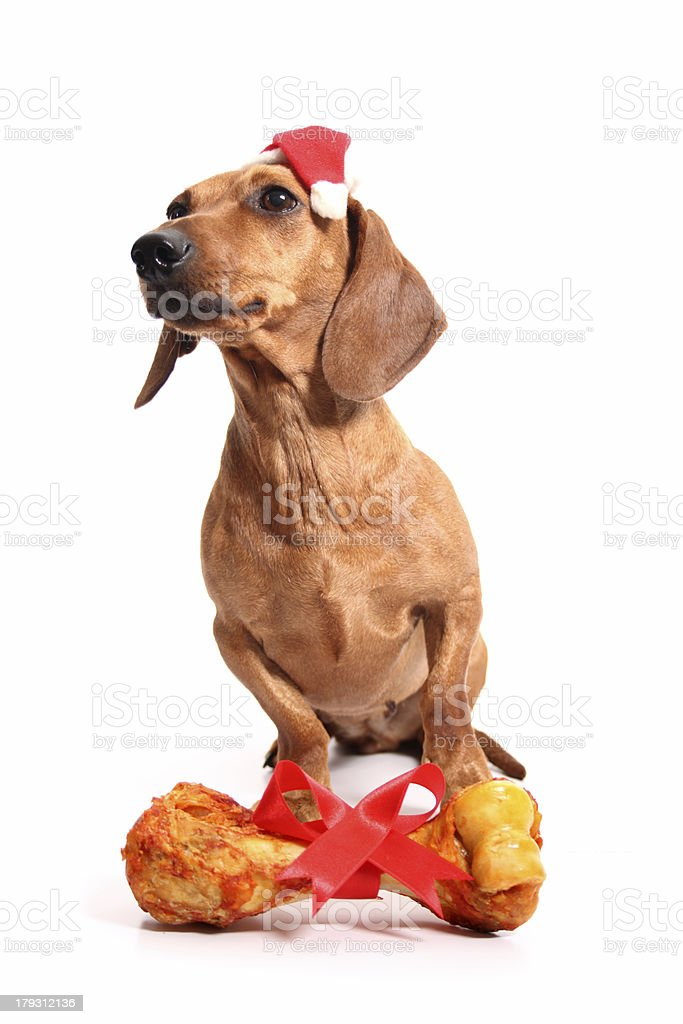 Christmas dog's gift royalty-free stock photo