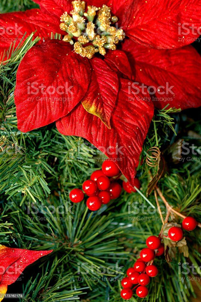 Christmas Flower royalty-free stock photo