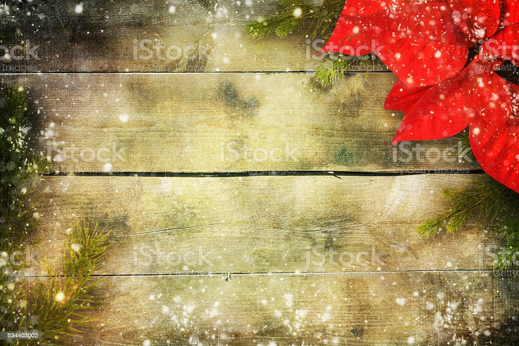 Christmas flower poinsettia over wooden background stock photo