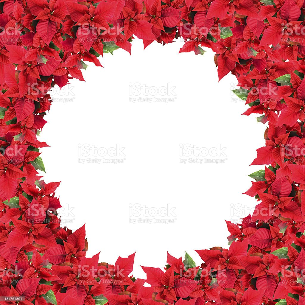 christmas frame from poinsettias isolated on white royalty-free stock photo