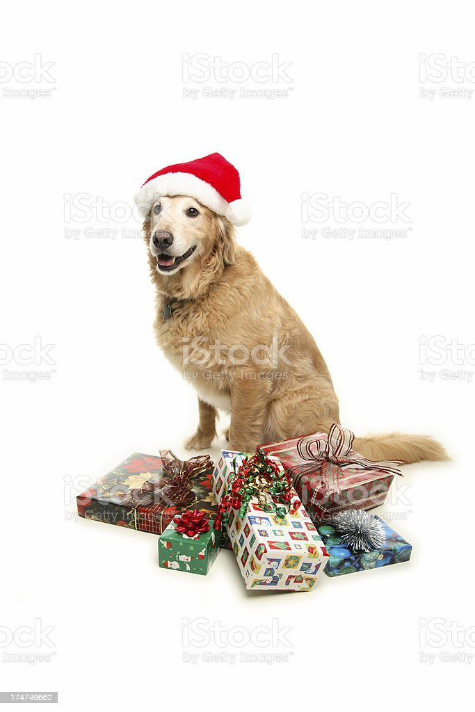 Christmas Golden. royalty-free stock photo