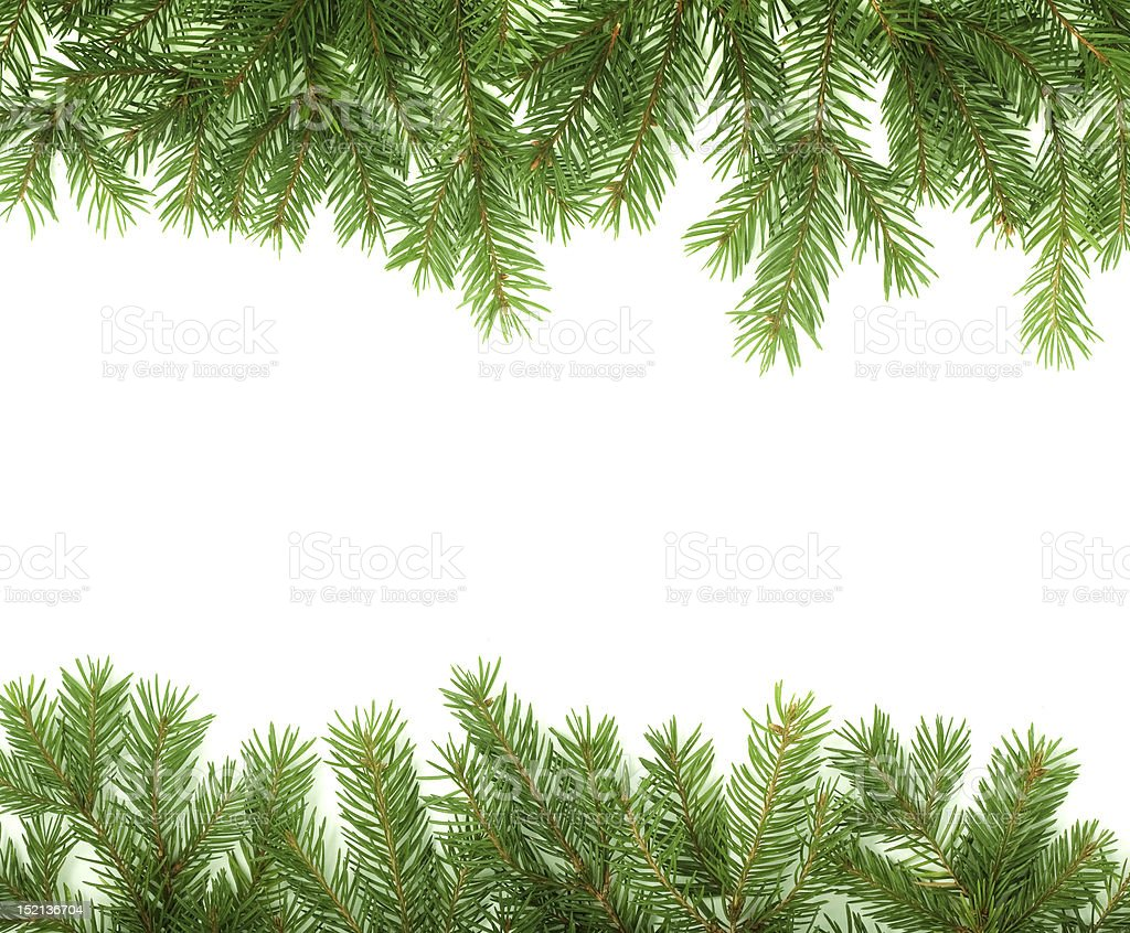 Christmas greenery border on a white background royalty-free stock photo