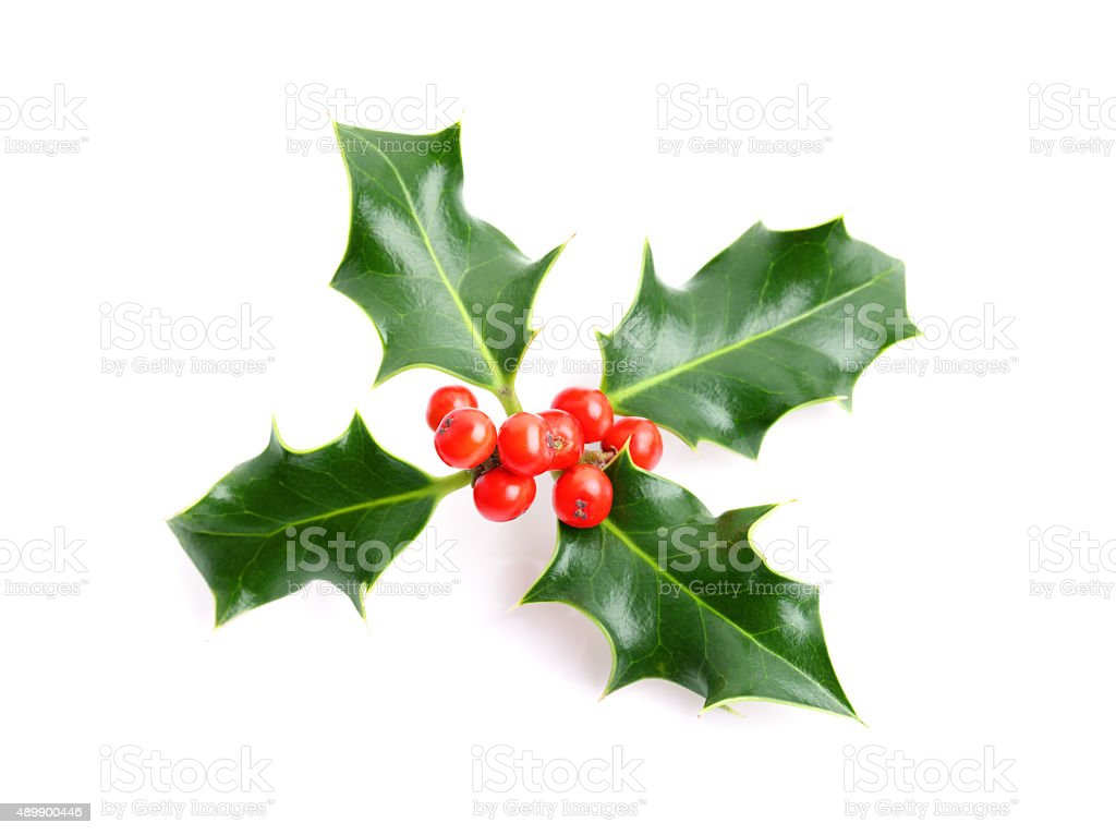 Christmas holiday holly decoration stock photo