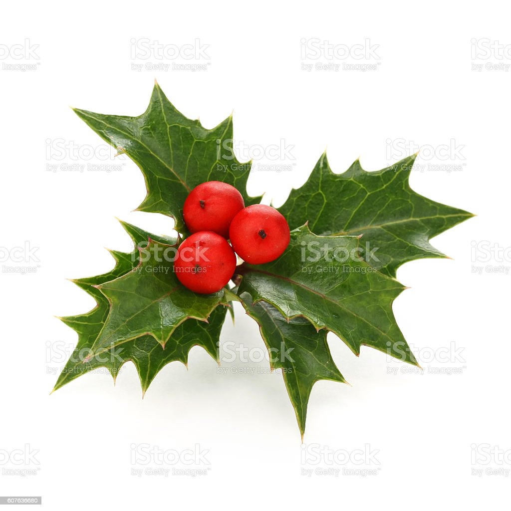 christmas holly berry leaves, chritmas icon stock photo