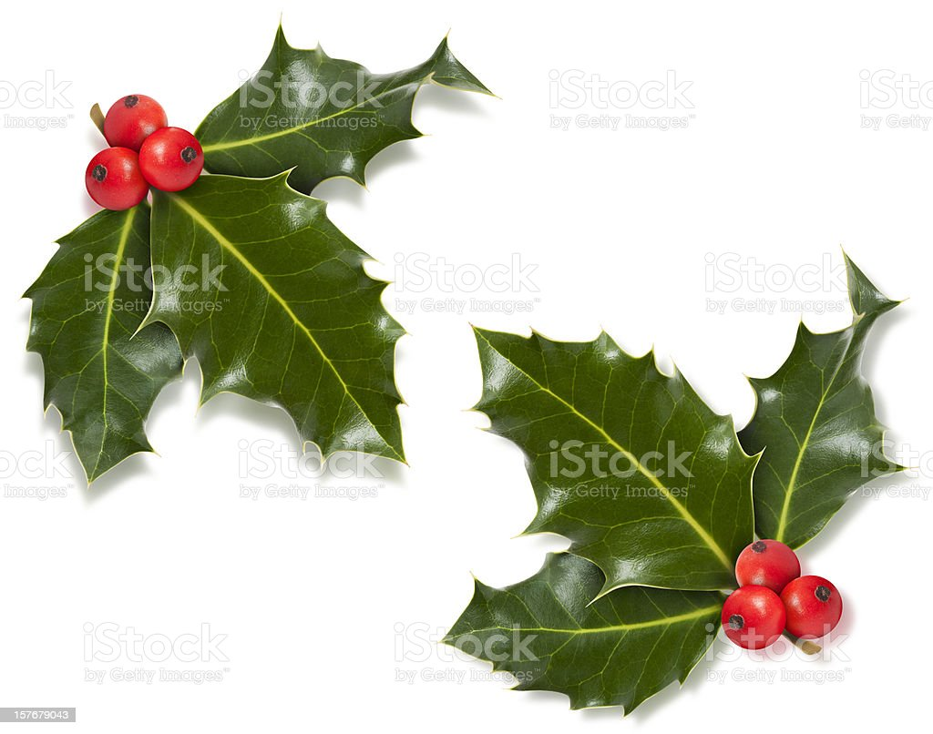 Christmas holly corner with clipping path stock photo