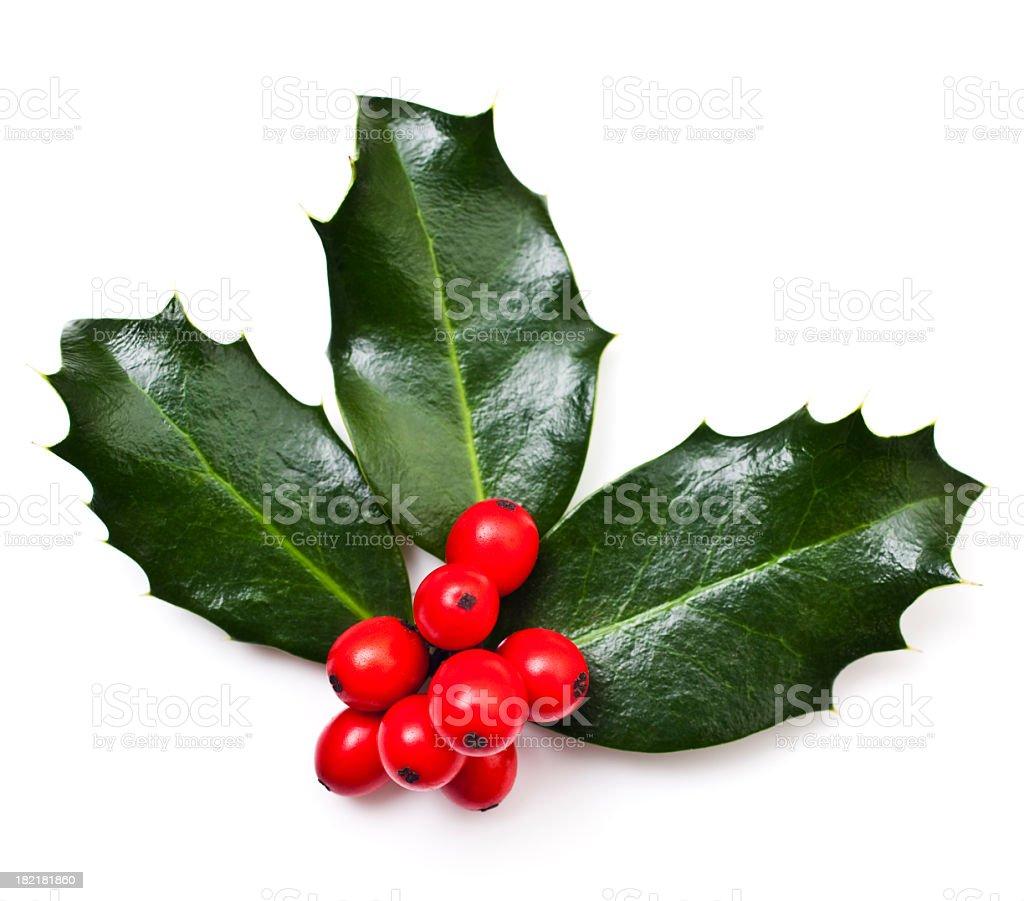 Christmas Holly royalty-free stock photo
