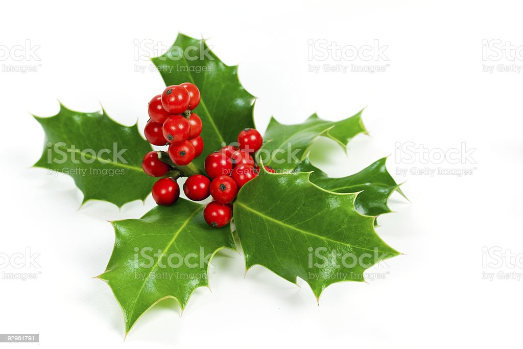 Christmas holly with red berries on a white background stock photo