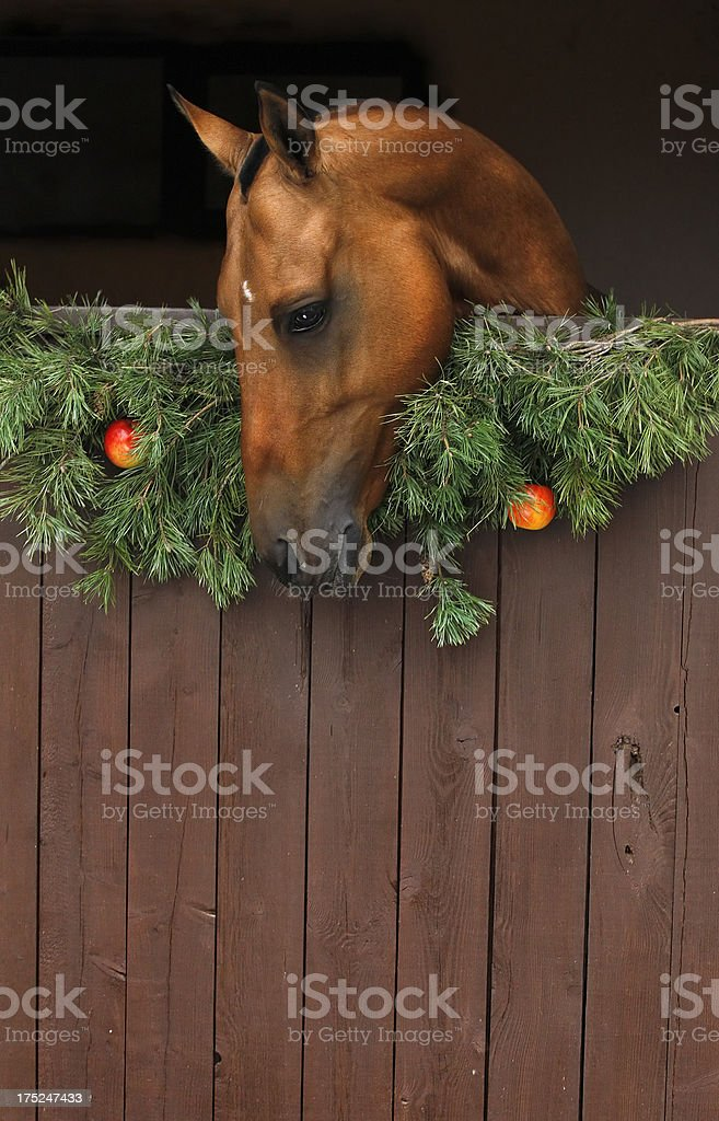 Christmas horse royalty-free stock photo