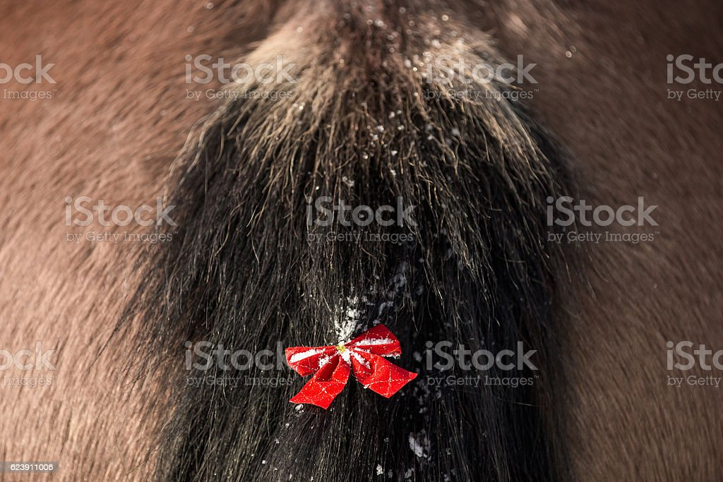 Christmas horse tail with red bow stock photo
