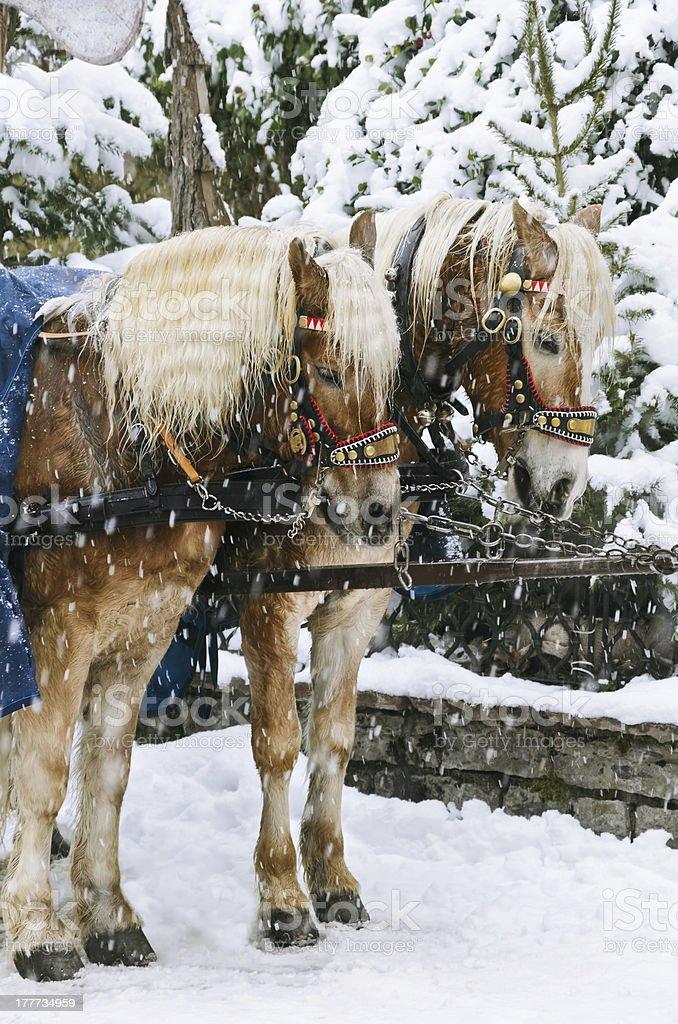 Christmas Horses royalty-free stock photo