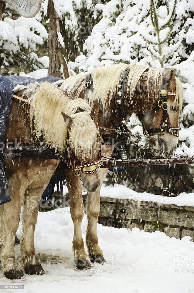 Christmas Horses royalty-free stock photo