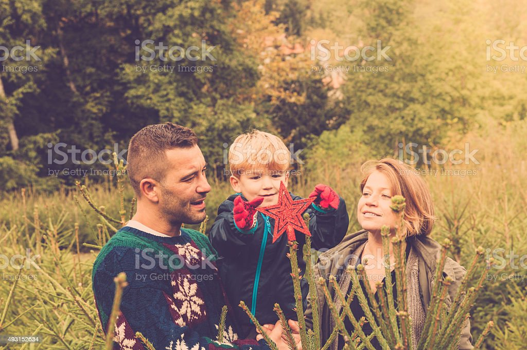 Christmas in the woods stock photo