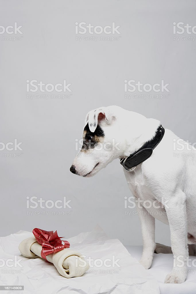 Christmas Jack 0013 stock photo