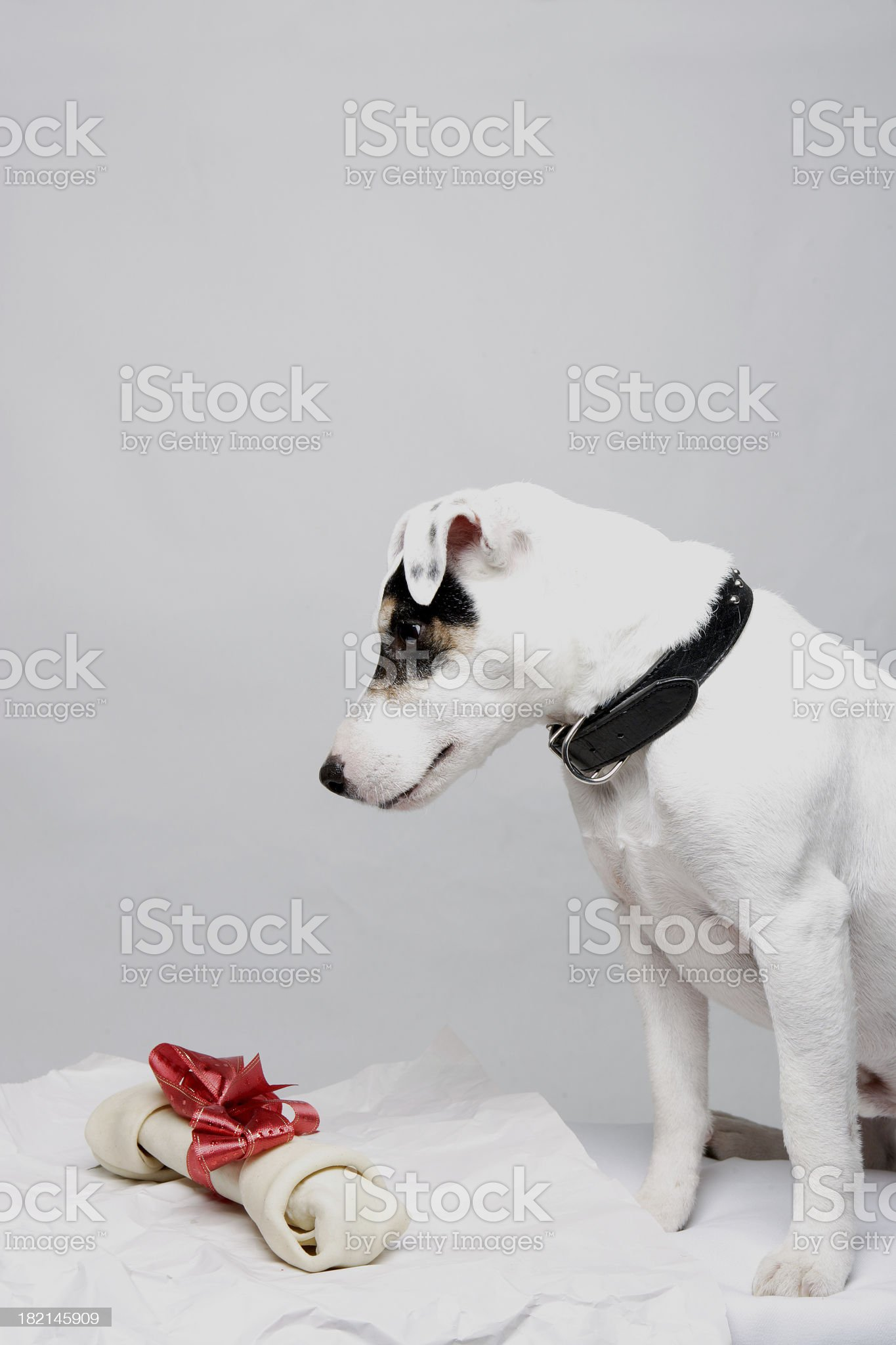 Christmas Jack 0013 royalty-free stock photo