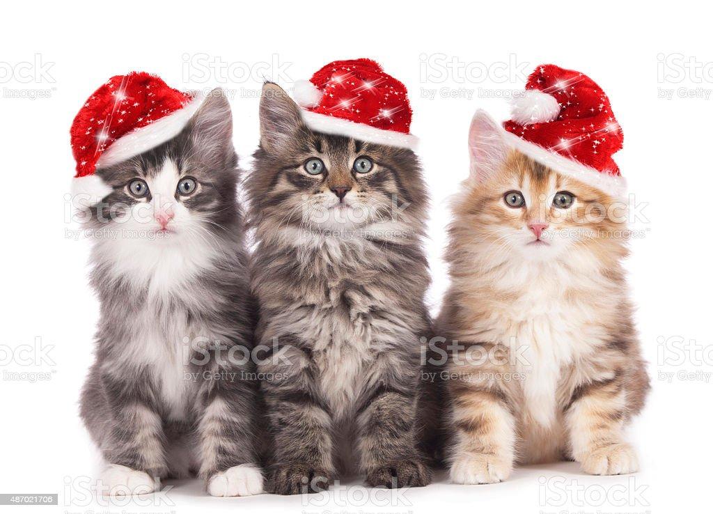 Christmas Kitten stock photo