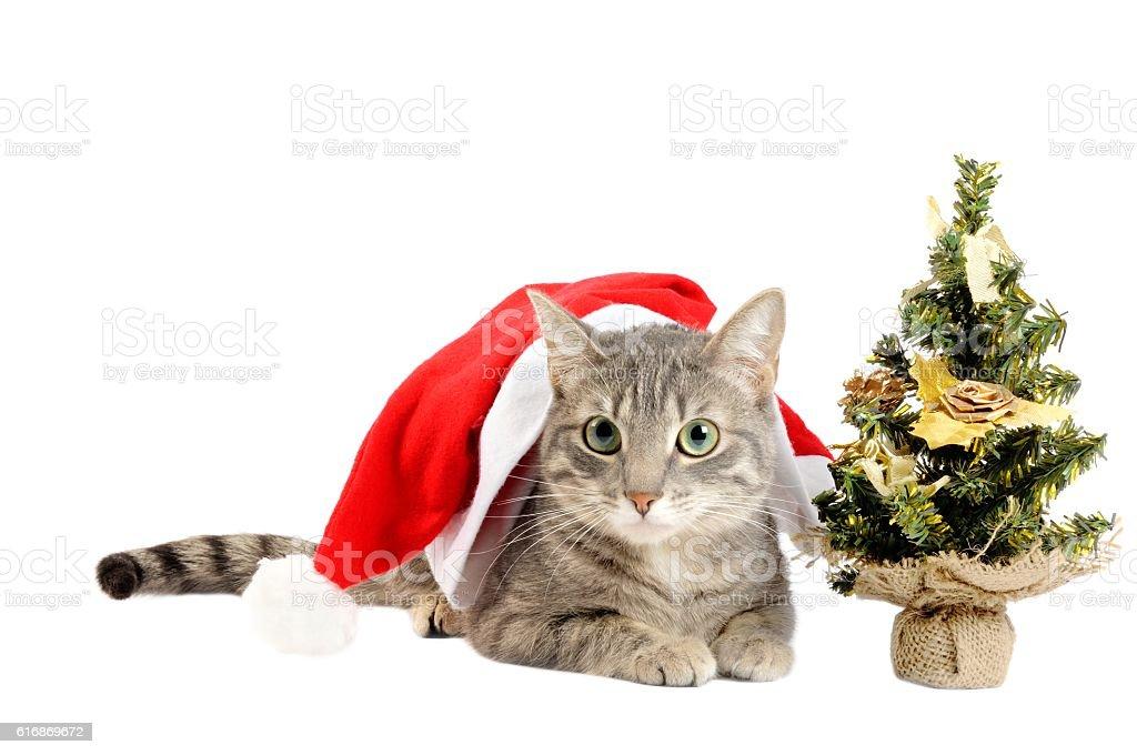 Christmas kitten with tree stock photo