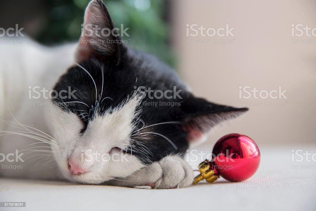 Christmas kitty sleeping stock photo