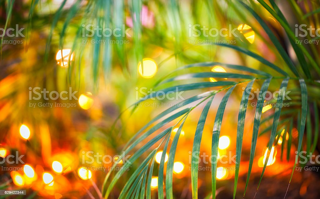 Christmas Lights in Tropical garden stock photo