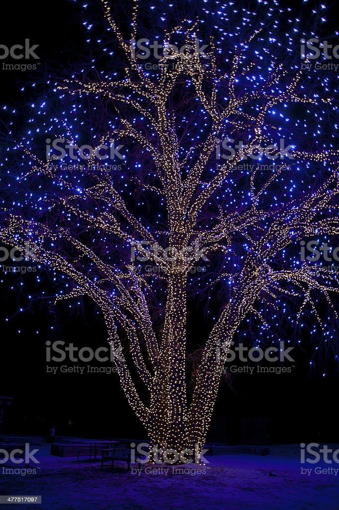 Christmas Lights on Cottonwood Tree stock photo