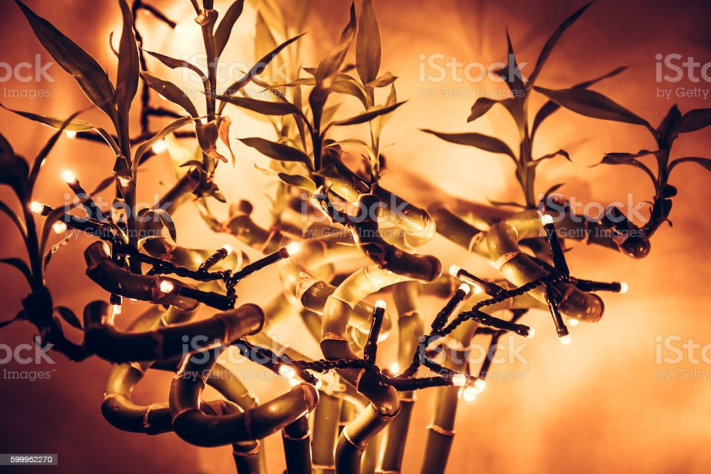 christmas  lights on tropical bamboo tree with orange background stock photo