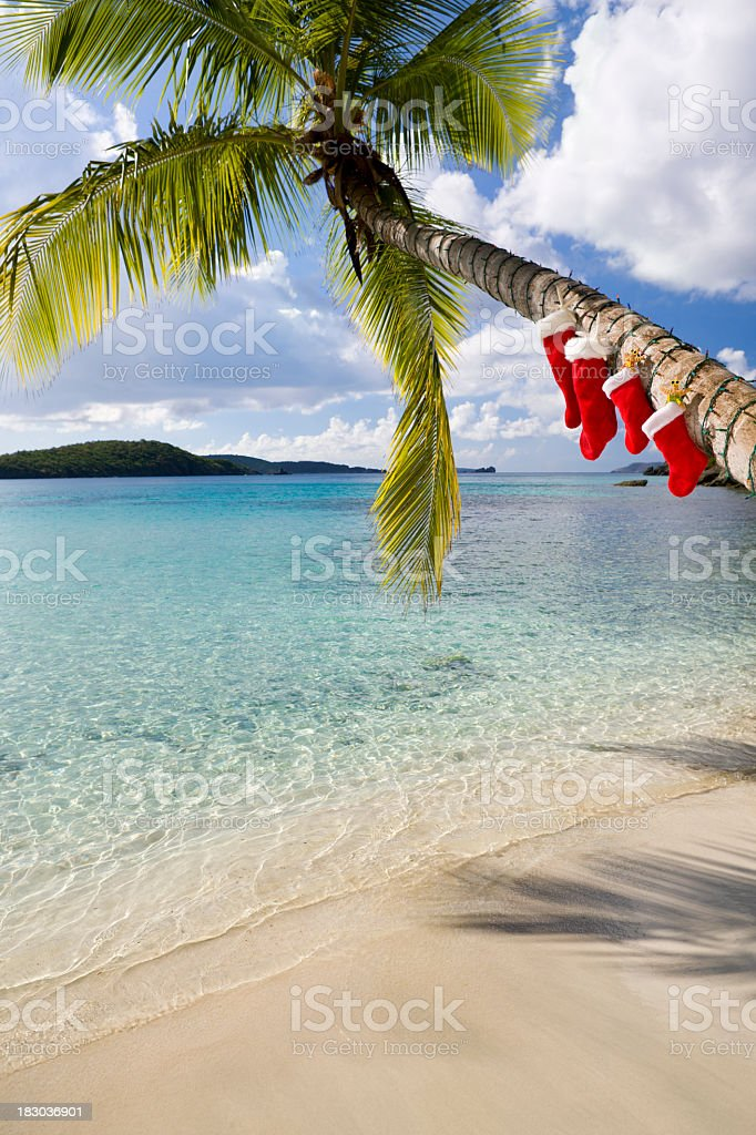 Christmas palm tree on a Caribbean beach royalty-free stock photo