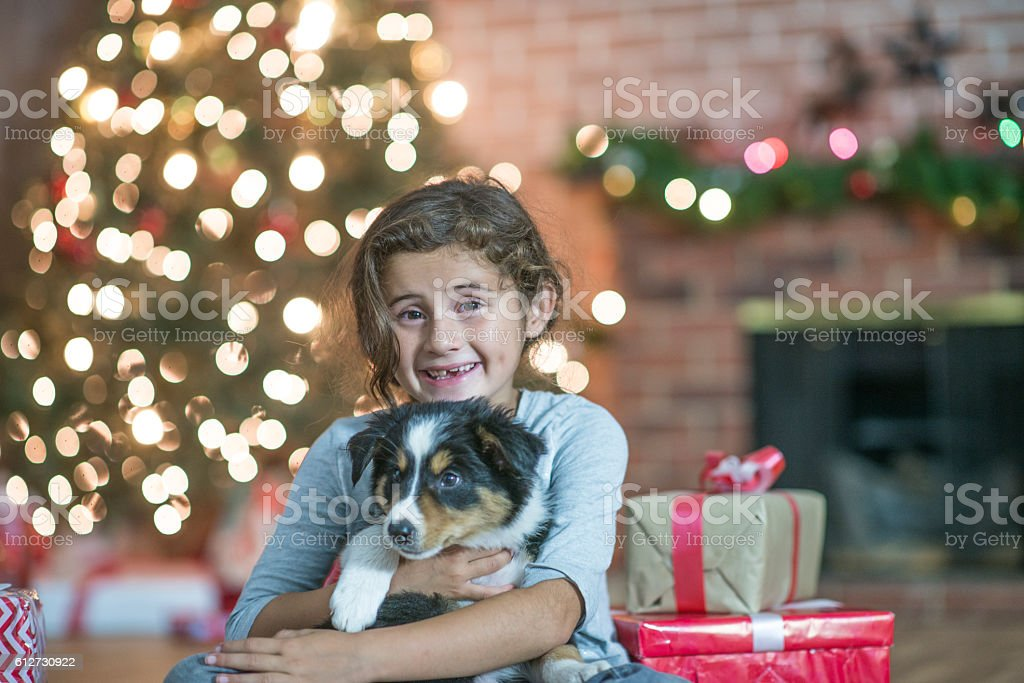 Christmas Pet Adoption stock photo