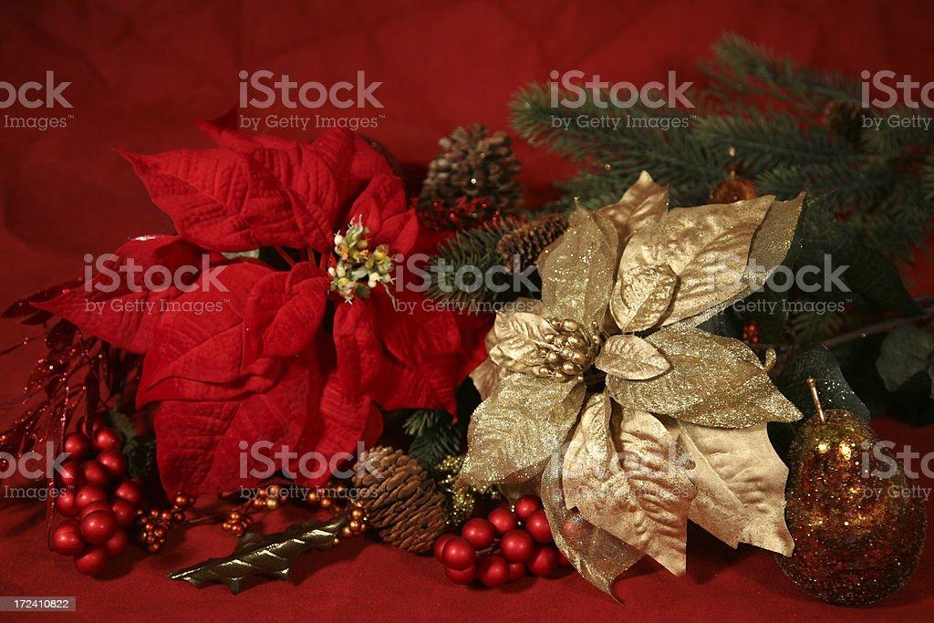Christmas Poinsettias royalty-free stock photo