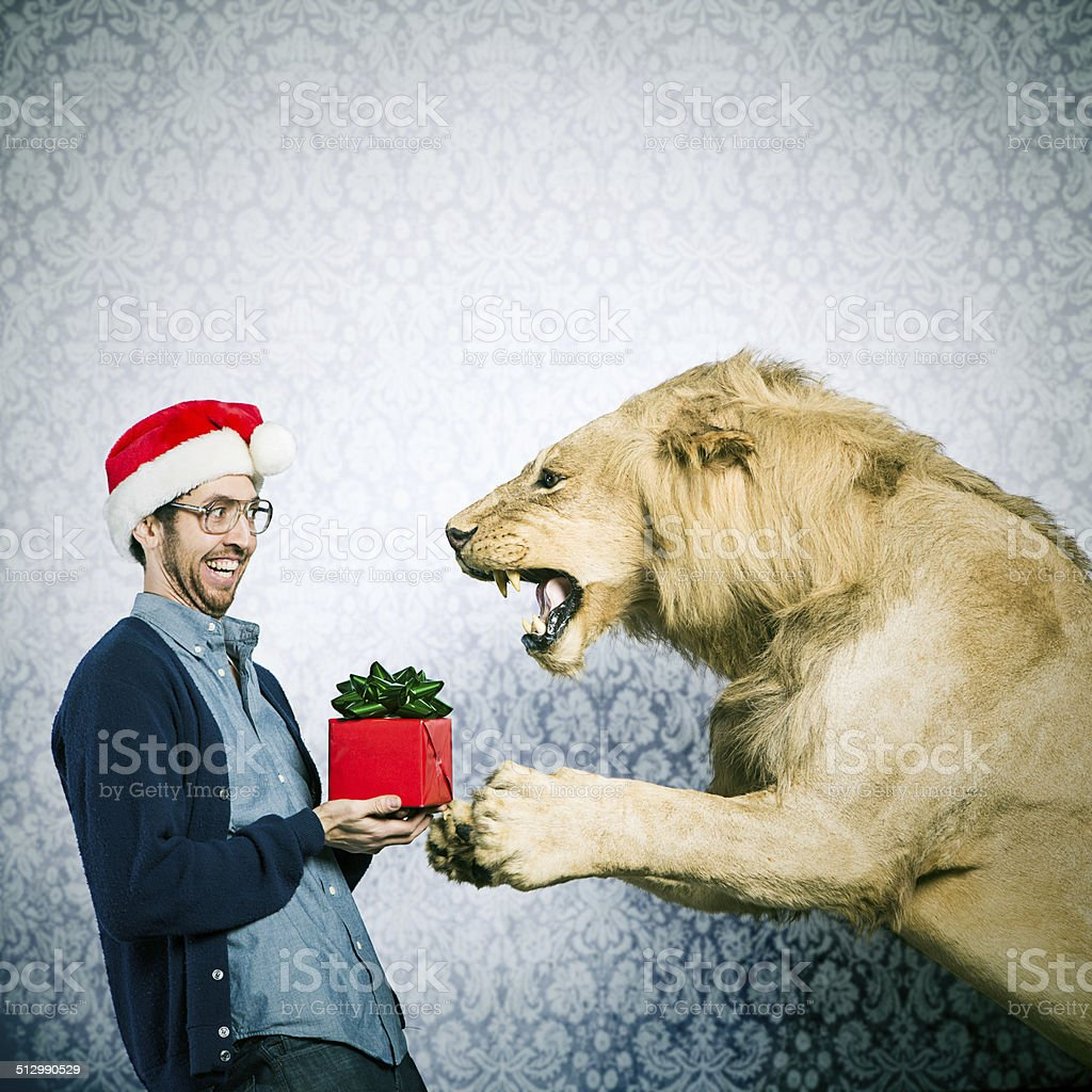 Christmas Present for a Lion stock photo
