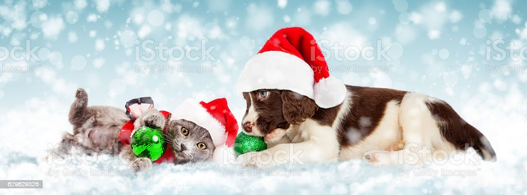 Christmas Puppy and Kitten in Snow stock photo