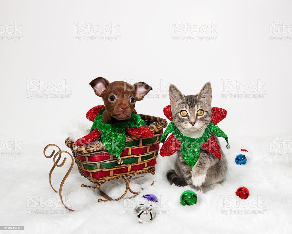 Christmas Puppy and Kitten stock photo