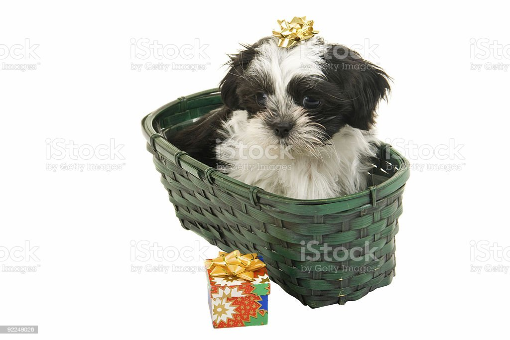 Christmas Puppy In A Basket royalty-free stock photo