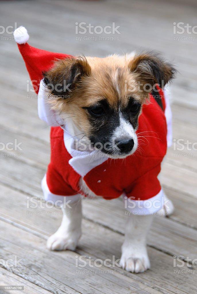 Cachorro de Navidad foto de stock libre de derechos