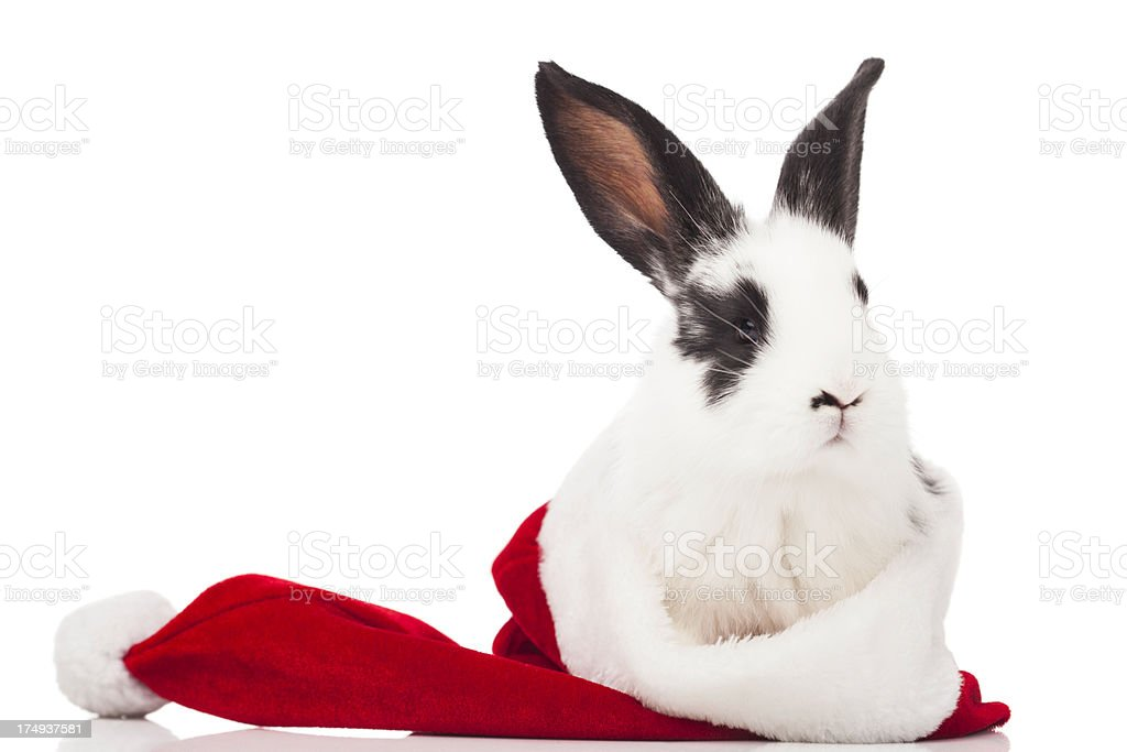 Christmas Rabbit royalty-free stock photo