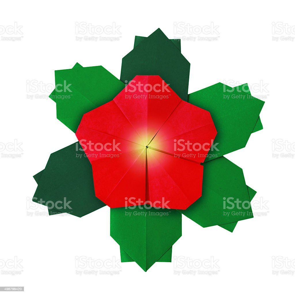 Christmas red flower stock photo