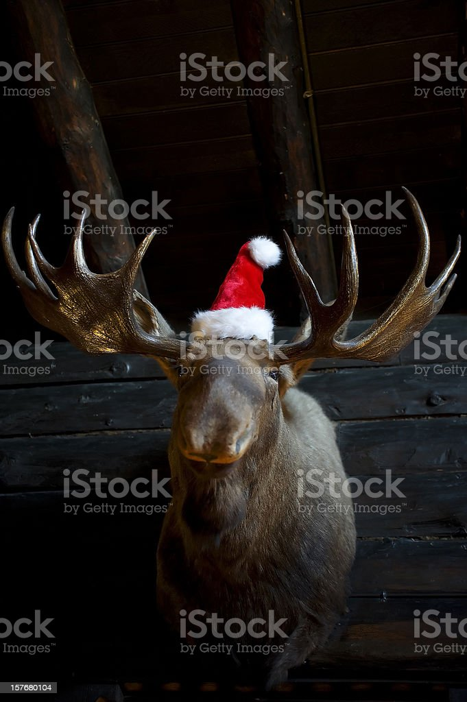 Christmas Reindeer with santa hat stock photo