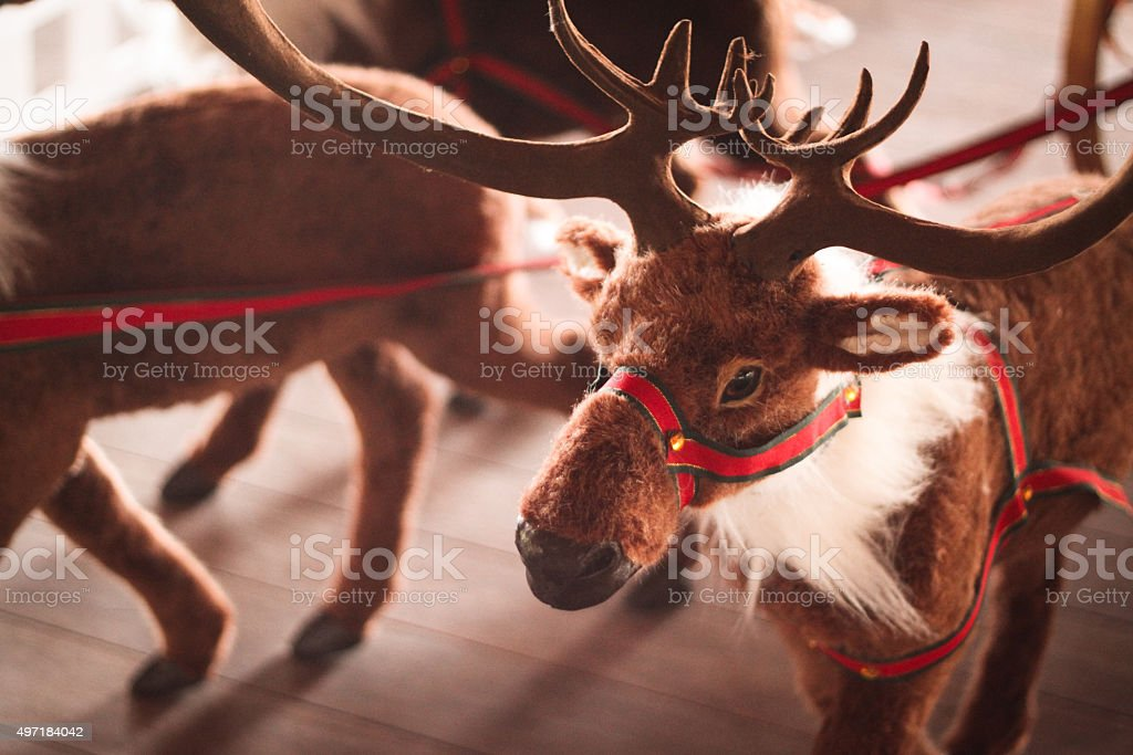 Christmas Reindeers stock photo