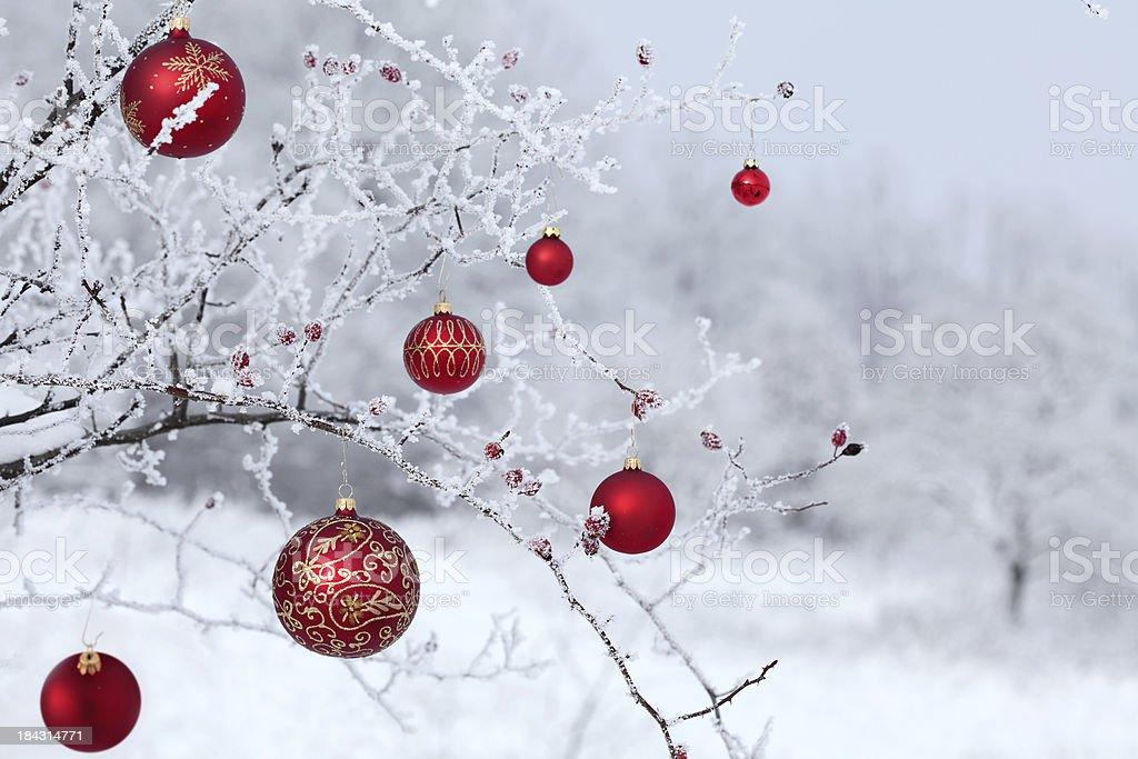 christmas rosehip royalty-free stock photo
