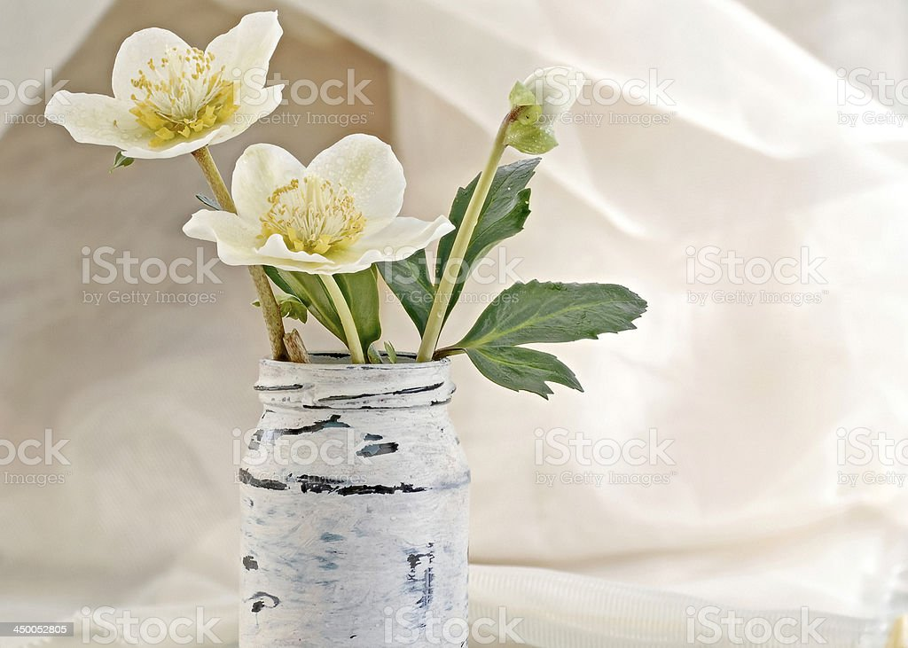 Christmas roses in an old glass stock photo